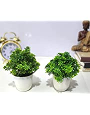 Litleo Great for Home Or Office Decoration or Birthday Gift Set of 2 Mini Green Table top Bonsai