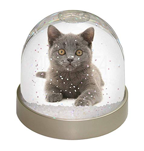 Advanta Group British Blue Kitten Cat Photo Snow Globe Waterball Stocking Filler Gift