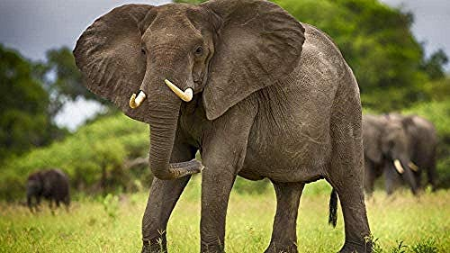 1000 Pieces Wooden Jigsaw Puzzle Adult Children's Classic Puzzle Leisure Game Toys Prairie Elephant Very Challenging Family Decorations Unique Present