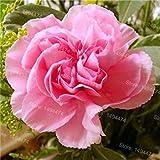 レアカーネーションの種混合色の花の種子の100pcs /ホームガーデンのお母さんのギフト9用バッグcaryophyllus花の種