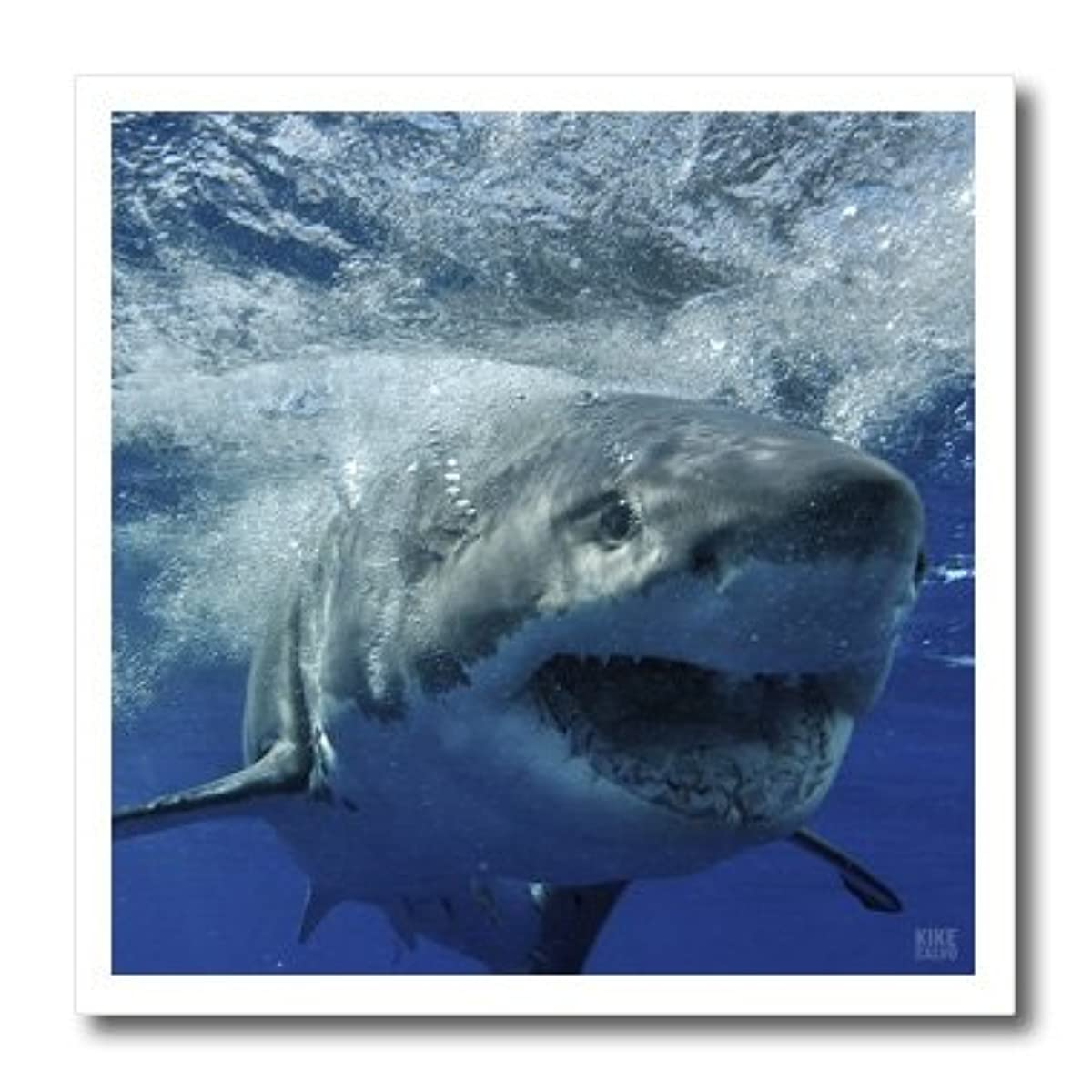 3dRose ht_10587_1 Great White Shark-Iron on Heat Transfer for White Material, 8 by 8-Inch