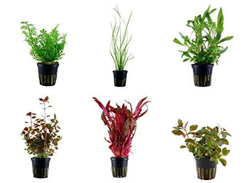 Tropica Hintergrund Set mit 6 Topf Pflanzen Aquariumpflanzenset Nr.27 Wasserpflanzen Aquarium Aquariumpflanzen
