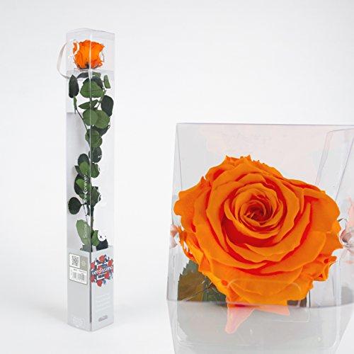Inter Flowers - 1x Rose - 50cm - ORANGE - preserved, konserviert - gefriergetrocknete Blumen, ewig blühend, sehr lange haltbar Rose Blume Haus Mini Dekoration Geschenk Unikat Special in Geschenkbox