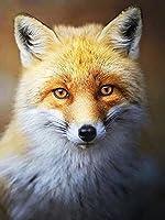 5D DIYダイヤモンド絵画フォックスダイヤモンド刺繡動物新製品モザイクラインストーン画像家の装飾A9 40x50cm