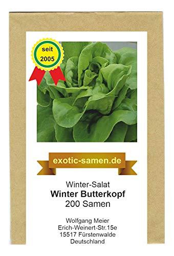 Winter-Kopfsalat - Winterbutterkopf - 500 Samen