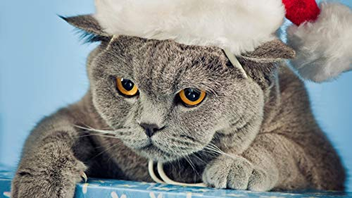 JZDTMMAN DIY MalenNachZahlen Graue Katze Mit Weihnachtsmütze Erwachsene Kinder Zeichnen Anfänger Ohne Rahmen Wohnkultur Geschenke 40x50cm