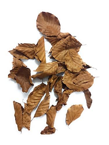 Topbilliger Pflanzen Getrocknete Buchenblätter - Buchenlaub - Natürliches Futter für Garnelen und Schnecken (100 stck.)