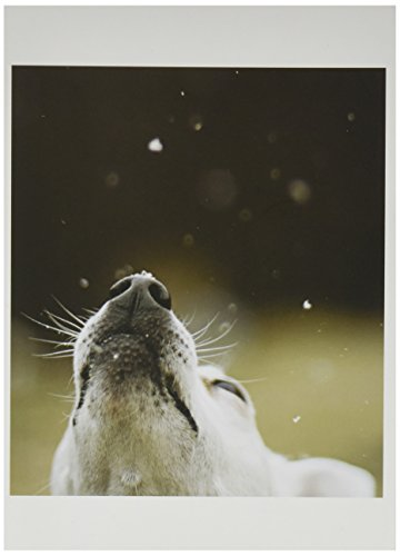 Nouvelles Images Holiday Boxed Note Card Set, In Like a Lion, Out like a Lamb (XDB 415)