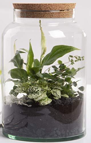 Esschert Design Halboffene Terrarium Flasche Glas 7L Pflanzen Deko Gewächs Haus Blumen Kork Haus