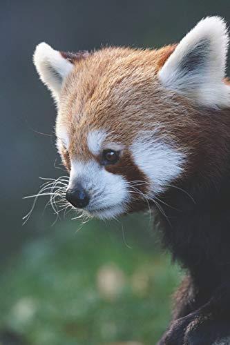 Katzenbär / Panda Notizbuch: mir rotem Panda aka. Katzenbär als Motiv   120 Seiten liniert in Taschenbuchgröße