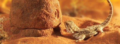 Exo Terra PT2823 Futterfelsen Termite Hill - 2