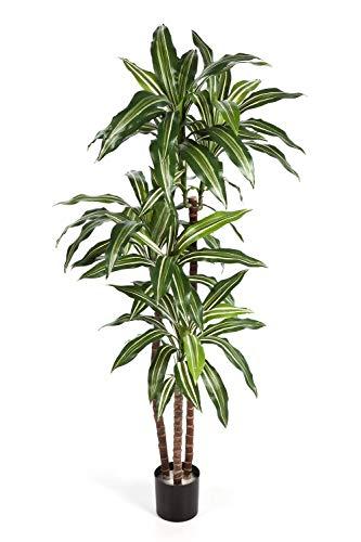 artplants.de Set 'Dracaena Fragrans sintética + Spray de protección UV' - Drácena de plástico Laura, Troncos Naturales, Verde-Blanco, 150cm