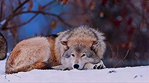 HJHJHJ Rompecabezas de 3000 Piezas para Adultos, Rompecabezas de Madera de Lobo de Nieve para Adultos, 3000 122x81cm