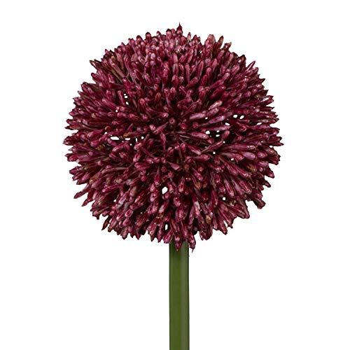 Gasper Kunstblume, künstliche Allium rot H. 64cm Blüte D. 11cm