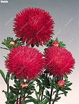 VISTARIC 2: 100 Pcs/Sac Rare Eucalyptus Arc-en-Floraison Graines, Graines Arbre Tropical, Eucalyptus Plantes pour Jardin d'ornement Bonsai 2