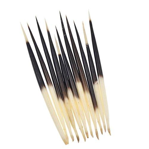 Kesheng 10 Stücke Stachelschweinborsten Porcupine Quills Basteln Ornament Dekor