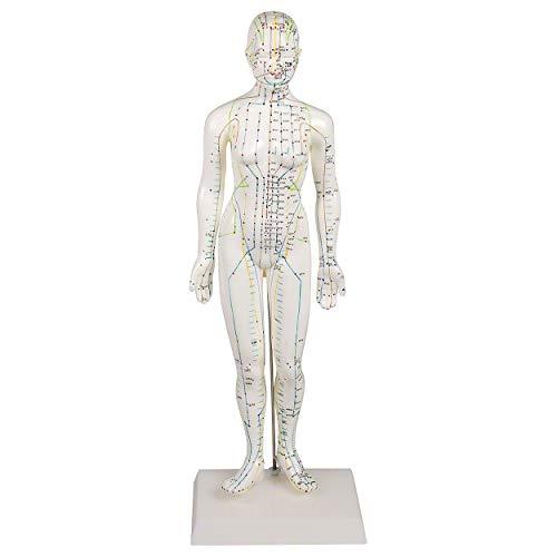 Akupunkturfigur weiblich 45 cm, Anatomie Modell, Anatomische Lehrmittel