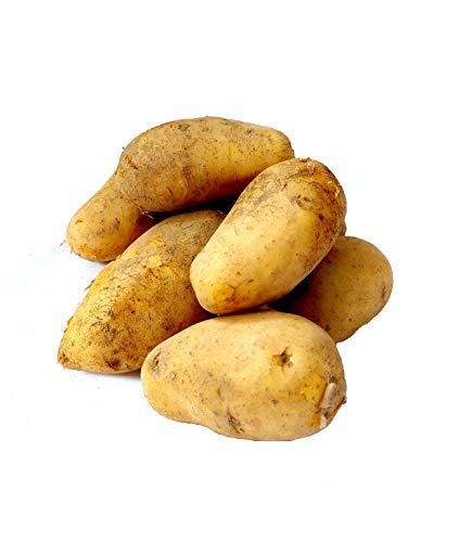 Frische Sieglinde festkochende deutsche Speisekartoffeln Kartoffel 1-25 KG neue Ernte 2020 festkochend Salatkartoffel zum Grillen für Kartoffelsalat Pellkartoffeln Bratkartoffeln Pommes Frites