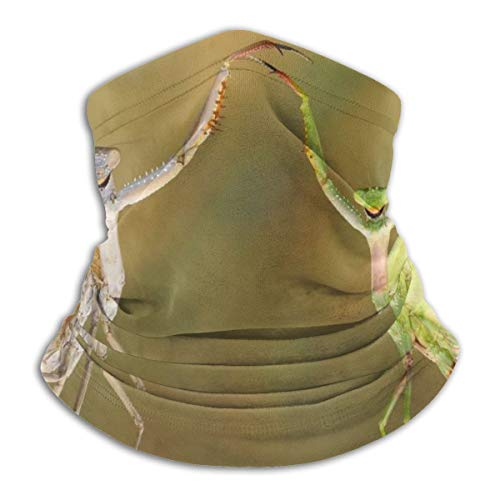 Cyloten Face Scarf Funny Praying Mantis Branch Dancing Insect Neck Warmer Durable Riding Balaclava Bandana Multi-Function Neck Gaiter Scarf Reversible Neck Heating Wrap For Hiking Cycling Sports