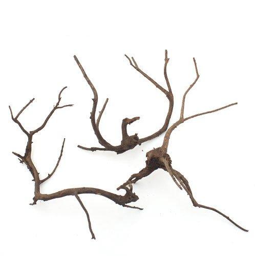 形状お任せ 煮込み済み 極上流木 Mサイズ(約20〜30cm) 3本セット 60cm水槽向け