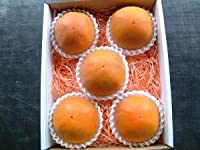糖度22度 返金保証 和歌山 柿 新秋柿 2L 6玉 約1.3kg 化粧箱 贈答用