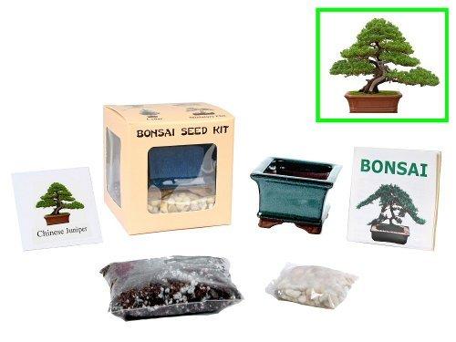 Eve's Chinese Juniper Bonsai Seed Kit, Woody, Complete Kit to Grow Chinese Juniper Bonsai Tree from Seed