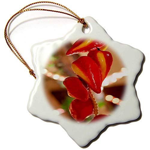 3dRose Ceramic Red Hot Chili Peppers Strung on String and Hanging on from. - Ornaments (ORN_52089_1)