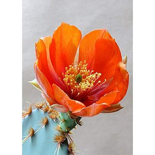 SINACO Kit de pintura de diamante para adultos, 5D, para manualidades, para decoración del hogar, flores rojas, 11,8 x 15,7 pulgadas