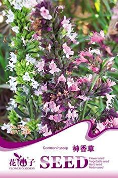 VISTARIC Neu Arriva !! 100 Samen/pack orange Sun-Blumen-Anlage Balkon Garten Topfbonsaipflanzen Blumen Scutellaria barbata Seeds