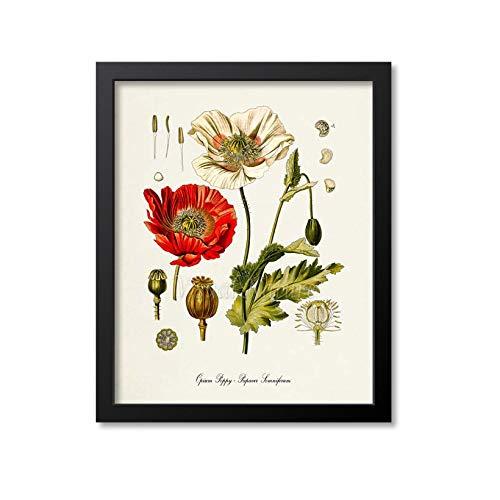 Opiummohnblumen-Druck, Opiummohn, botanischer Kunstdruck, Opiummohn, Medizin-Drogen-Pflanze, Wandkunst, Morphine, Papaver Somniferum