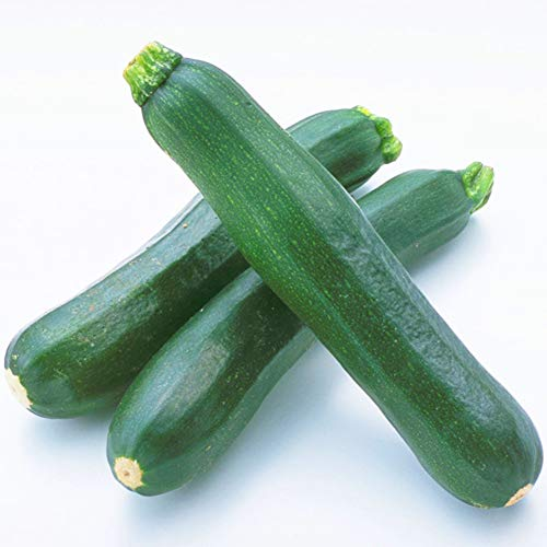 lamta1k Zucchini-Samen, 10 Stück Kletter-Sommerkürbis Zucchini-Samen Nahrhafte Gemüsegartenpflanze Zucchini Seeds