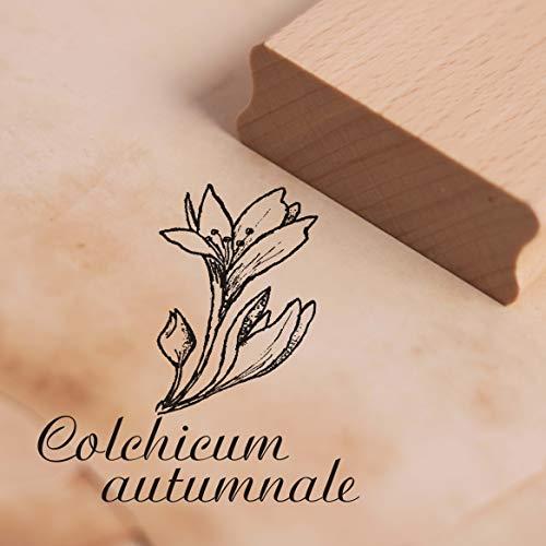 Stempel Colchicum autumnale - Herbstzeitlose Motivstempel ca. 38 x 38 mm