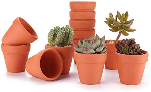Contenedor de plantas 8cm Terracotta Clay Pots Pack de 12 - Pequeño Nursery CABRY CACTUS POT AGUA...