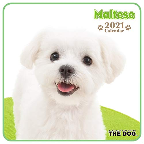 2021年 THE DOG ミニカレンダー (マルチーズ)
