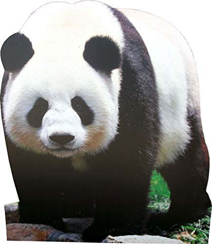aahs!! Engraving Animal Life Size Cardboard Cutout Stand Up | Standee Picture Poster Photo Print (Panda Bear)