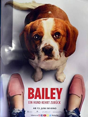 Bailey - Ein Hund kehrt zurück - Teaser - Filmposter 120x80cm gerollt (2)