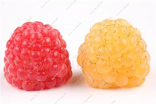 Coloré Blackberry Arbre Raspberry Graine Fruit Graine Mulberry Stratified Black Berry Bonsai non-OGM plantes bio 500 pcs/sac 8