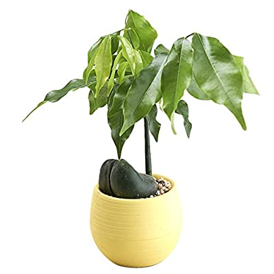 7x7x6.5cm Plastic Planters Indoor Modern Decorative Gardening for House Plants,Flowers,Succulents (Yellow)