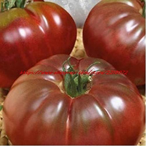 Pinkdose 100 Stück - frisch selten & quot; Schwarzer Prinz & quot; Tomaten-Bonsais - 100% Bio & amp; NON-GMO-Obstgemüse-Bonsais * Kostenloser Versand