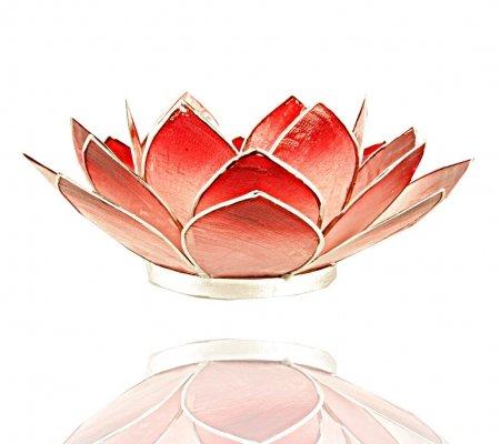 Trimontium TL12013S Teelichthalter in Form Einer dreiblättrigen Lotusblüte, Durchmesser Circa 14 cm, Capiz-Muschel, Info, Bicolor Karminrot/weiß, Aluminium, Rot, ca. 14 x 14 x 5