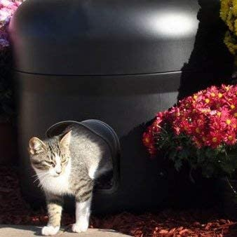 Kitty Tube