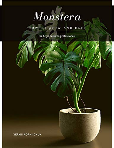 Monstera: How to grow and care