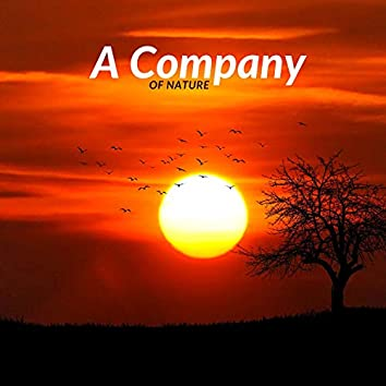 A Company Of Nature
