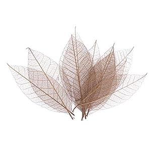 scheda supvox foglie secche foglie di scheletro esemplare segnalibro fai da te manuale del mestiere di arte decorazione 50pcs (marrone)