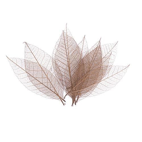 SUPVOX 50 peças de folhas de árvore de borracha secas amostras marcadores de livro adesivos de parede DIY Cartões de felicitações Arte Artesanato (marrom)