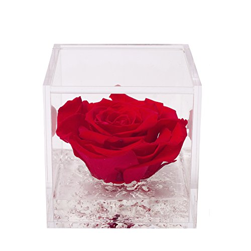 Flowercube Rosa 6X6 Colore Rosso PROFUMATA Rosa STABILIZZATA Regalo