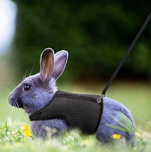 Petcomer Arnés Conejos con Correa Elástica para Animales Pequeños Conejos Hámsteres Gatos(L, Negro)