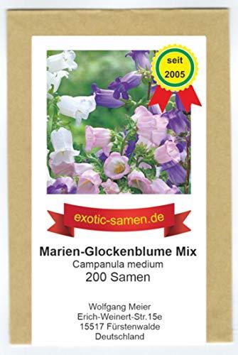 Campanula medium - Marien-Glockenblume - Samen-Mix - 200 Samen