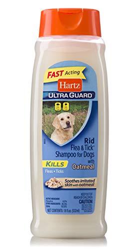 best flea shampoo