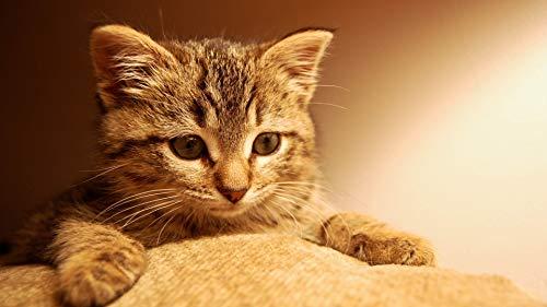 Puzzle 1000 piezas Regalo de arte de gato de ojos grandes en Juguetes y juegos Gran ocio vacacional, juegos interactivos familiares Rompecabezas educativo de juguete para aliv50x75cm(20x30inch)